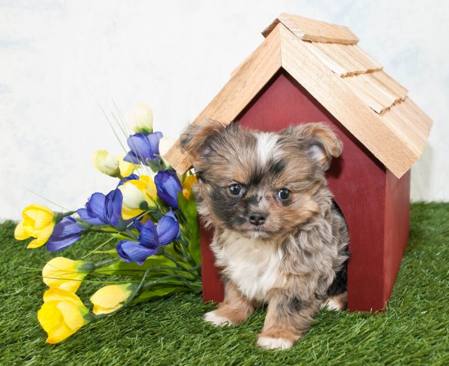 Top 5 Best Indoor Dog Houses in 2021 – Reviews & Buying